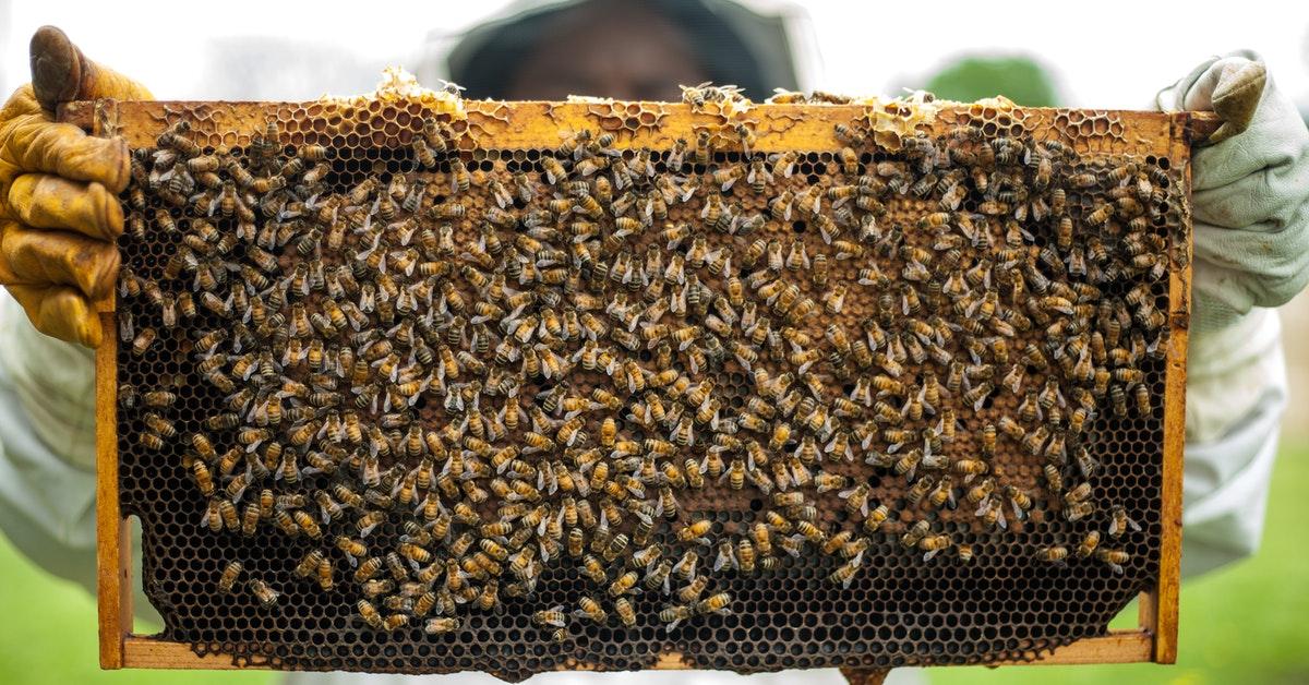 Beekeeping Courses [Online and Offline] in India