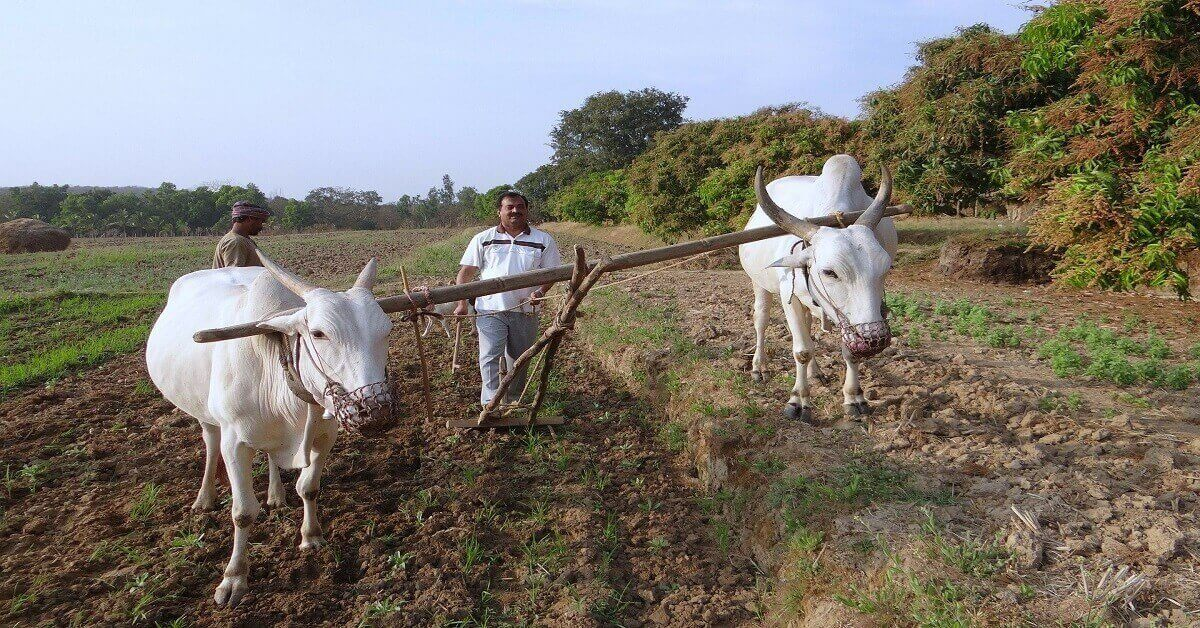 Organic Farming Courses in India [Online, Offline & Distance]
